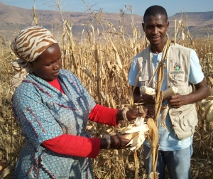A member of a community cooperative in South Africa, left, shows maize to an official with the KwaZulu-Natal Department of Agriculture and Environmental Affairs. Maize is a staple food eaten by a majority of South Africans.