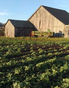 cropped-farm.jpg