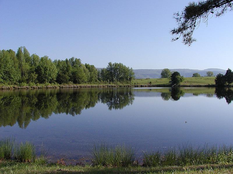 Is pond fertilization necessary uapb news for Fish pond fertilization