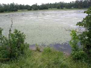 Pond with weeds