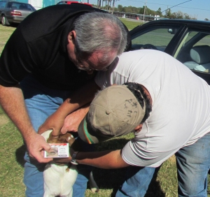Barber pole Scoring goat for worm article
