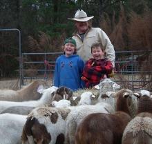 SheepFB