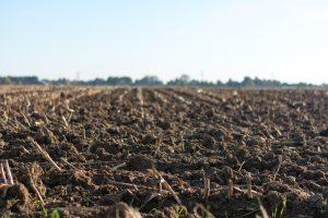 cropland-farm-farmland-1000057